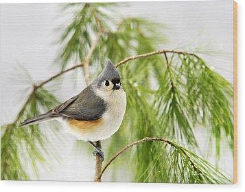 Winter Pine Bird Wood Print by Christina Rollo