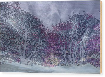 Wood Print featuring the photograph Winter Purple by Nareeta Martin