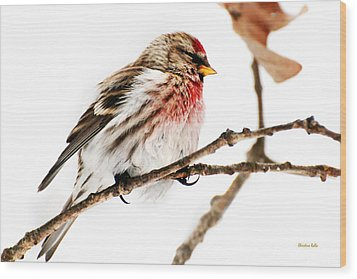 Winter Redpoll Wood Print by Christina Rollo