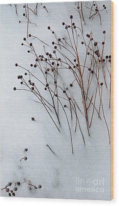 Winter Rest Wood Print by Diane E Berry