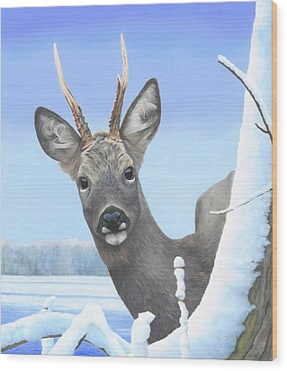 Winter Roebuck Wood Print by Clive Meredith