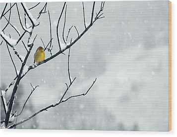 Winter Snow With A Touch Of Goldfinch For Color Wood Print
