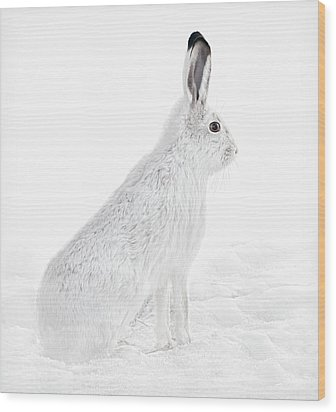 Wood Print featuring the photograph  Winter Snowshoe Hare by Jennie Marie Schell