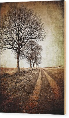 Winter Track With Trees Wood Print by Meirion Matthias