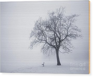 Winter Tree And Bench In Fog Wood Print by Elena Elisseeva
