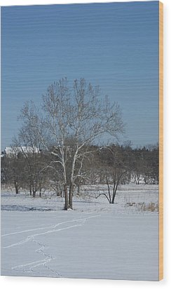 Winter Tree Wood Print by Heidi Poulin
