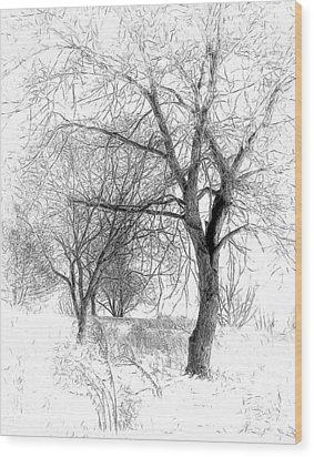 Winter Tree In Field Of Snow Sketch Wood Print by Randy Steele