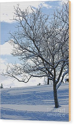 Wood Print featuring the photograph Winter Tree by Lila Fisher-Wenzel