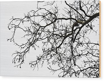 Winter Tree No. 69-1 Wood Print by Sandy Taylor