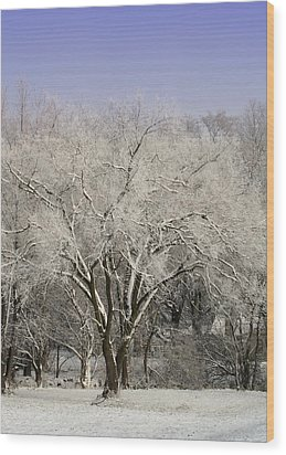 Wood Print featuring the photograph Winter Trees by Diane Merkle