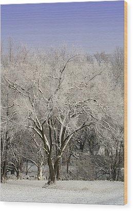 Winter Trees Wood Print by Diane Merkle