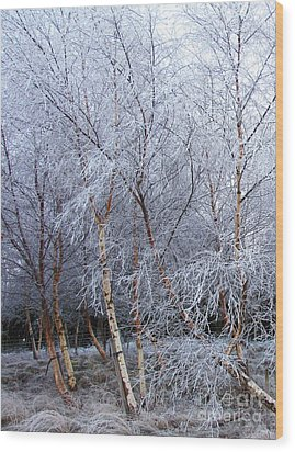 Wood Print featuring the photograph Winter Trees by Jacqi Elmslie