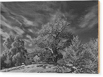 Winter Trees Wood Print by Mark Denham