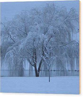 Winter Willow Tree Before Dawn_fort Worth_tx Wood Print by Barbara Yearty