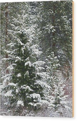 Wood Print featuring the photograph Winter Woodland by Will Borden