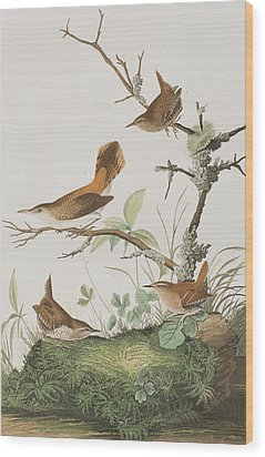Winter Wren Or Rock Wren Wood Print by John James Audubon