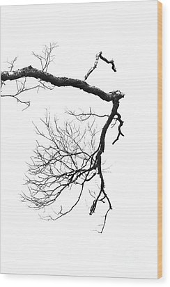 Wood Print featuring the photograph Wintered Over by Skip Willits