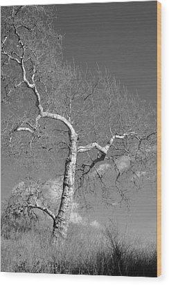 Winter's Ghost Wood Print