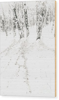 Wood Print featuring the photograph Winter's Shadows by The Forests Edge Photography - Diane Sandoval