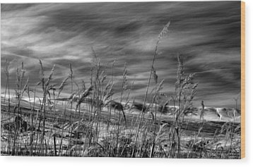 Wood Print featuring the photograph Winters Wheat by Al Swasey