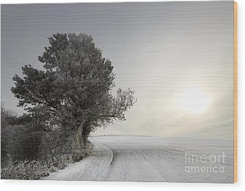 Wintery Landscape Wood Print by Angel  Tarantella