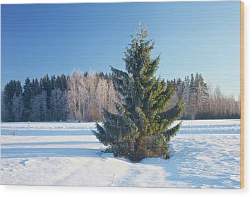 Wintry Fir Tree Wood Print