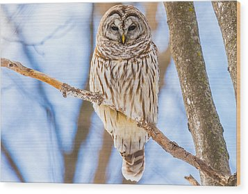 Wintry Stare Wood Print
