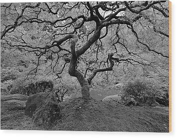 Wood Print featuring the photograph Wisdom Bw by Jonathan Davison