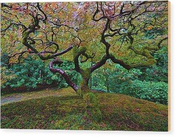 Wood Print featuring the photograph Wisdom Tree by Jonathan Davison