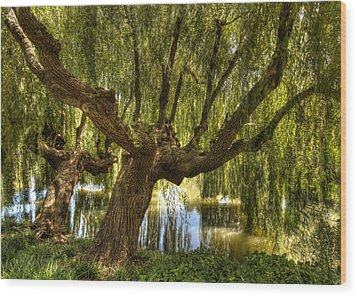 Wisdom Willow Wood Print by Coby Cooper