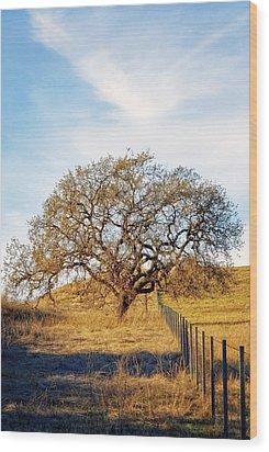 Wise Old Tree Wood Print by Aron Kearney