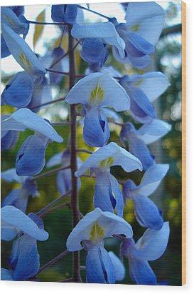 Wisteria - Blue Hooded Ladies Wood Print