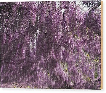 Wisteria Arbor At The Bardini Gardens Wood Print by Gerald Hiam