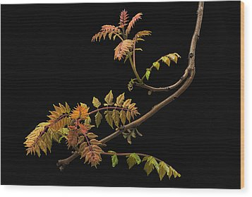 Wisteria Colors Wood Print