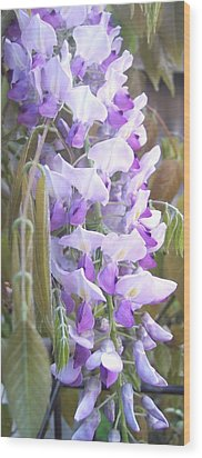 Wisteria Wood Print by Jean Booth