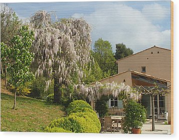 Wood Print featuring the photograph Wisteria by Richard Patmore