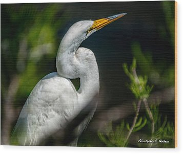 Wood Print featuring the photograph White Egret 2 by Christopher Holmes