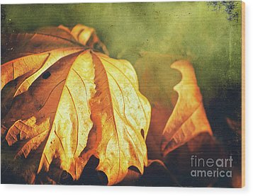 Wood Print featuring the photograph Withered Leaves by Silvia Ganora