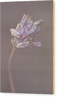 Wood Print featuring the photograph Withering Purplehead by Alexander Kunz