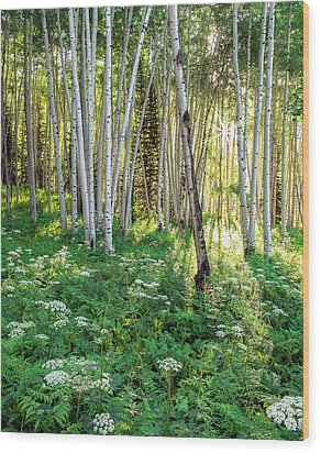 Wood Print featuring the photograph Within The Forest Deep by Tim Reaves