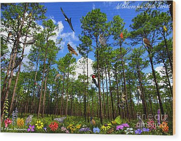 Withlacoochee State Forest Nature Collage Wood Print by Barbara Bowen