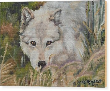 Wolf Among Foxtails Wood Print