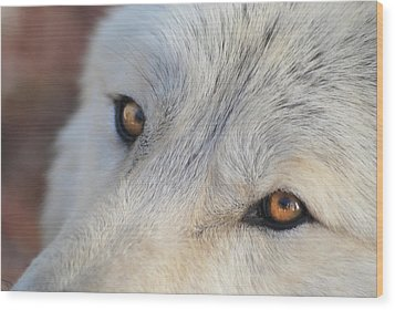 Wolf Eyes Wood Print by Carolyn Dalessandro