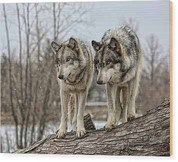 Wood Print featuring the photograph Wolf Pair by Shari Jardina
