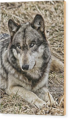Wood Print featuring the photograph Wolf Portrait by Shari Jardina