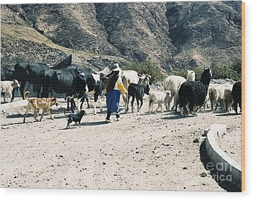 Woman Leading Cattle In Chile Wood Print by Trude Janssen