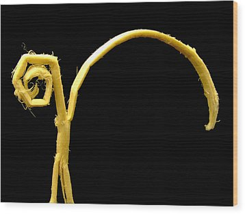 Wondering... Wood Print by Tassos Pasalis