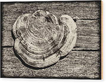 Wood Print featuring the photograph Wood Decay Fungi, Nagzira, 2011 by Hitendra SINKAR
