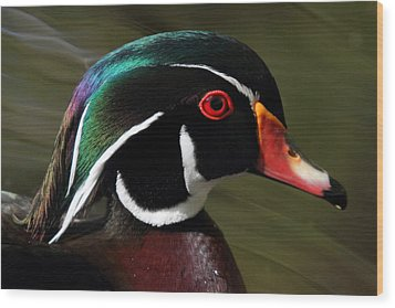 Wood Duck At Beaver Lake Stanley Park Vancouver Canada Wood Print by Pierre Leclerc Photography