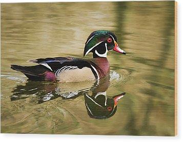 Wood Duck Cruising Wood Print